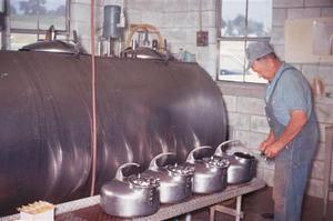 Norman working in the milking parlor